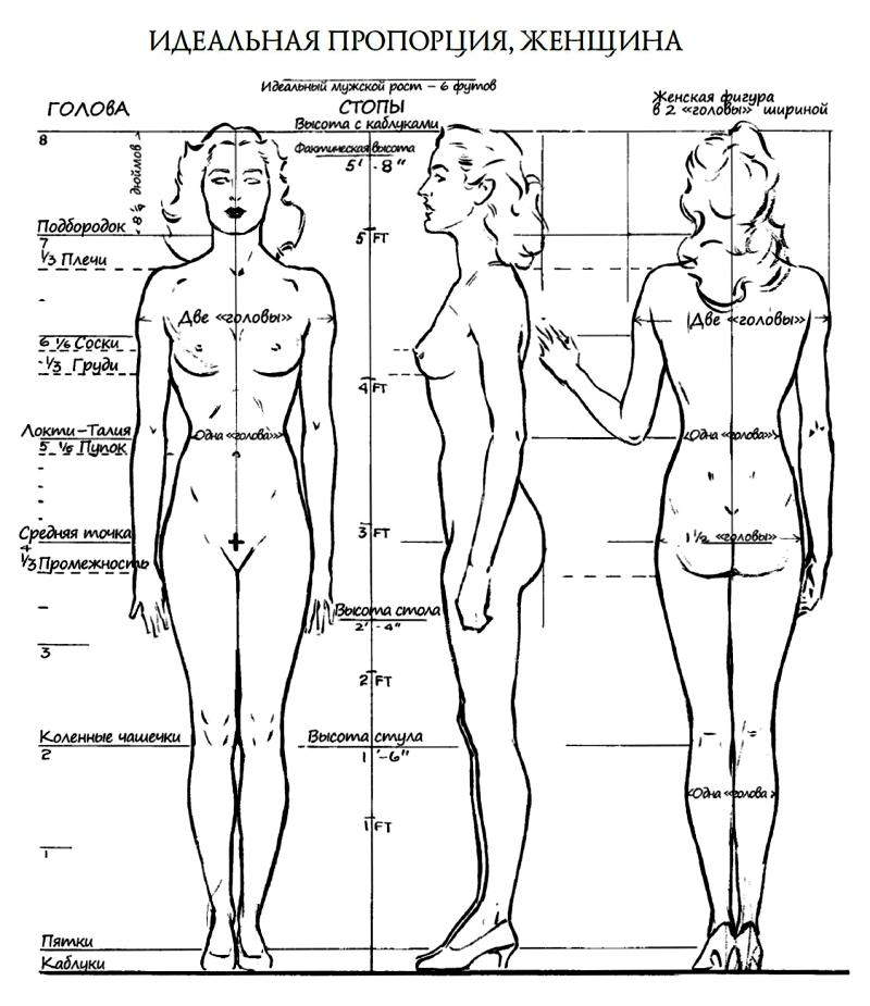 пропорции женщин