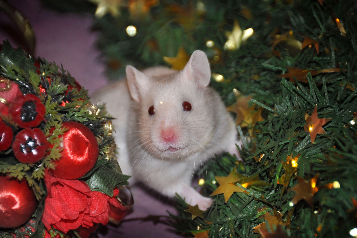 Новогодние картинки год крысы на рабочий стол