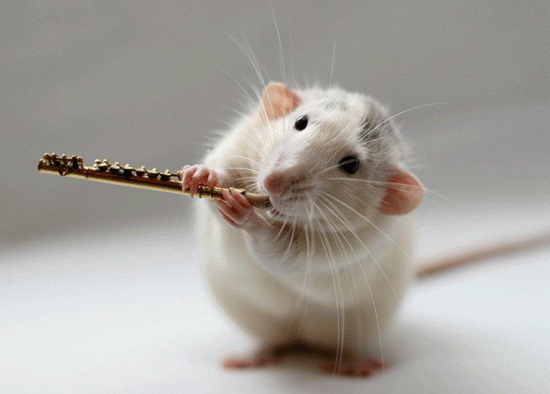 прикольные картинки года белой крысы менее